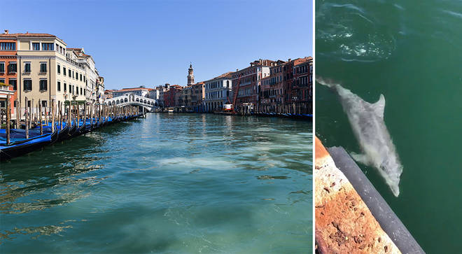 Wildlife has returned to Venice canals